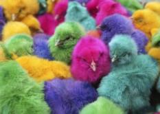 цветной пух