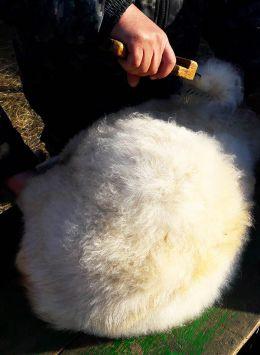 белый козий пух