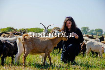 Пуховые козы экспедиция НХП