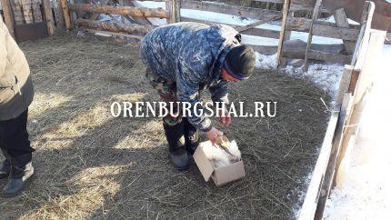 оренбургский пух