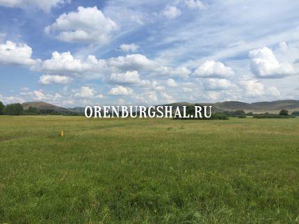 оренбург саракташ